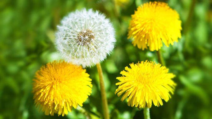 Растения, снимающие зуд от укусов насекомых