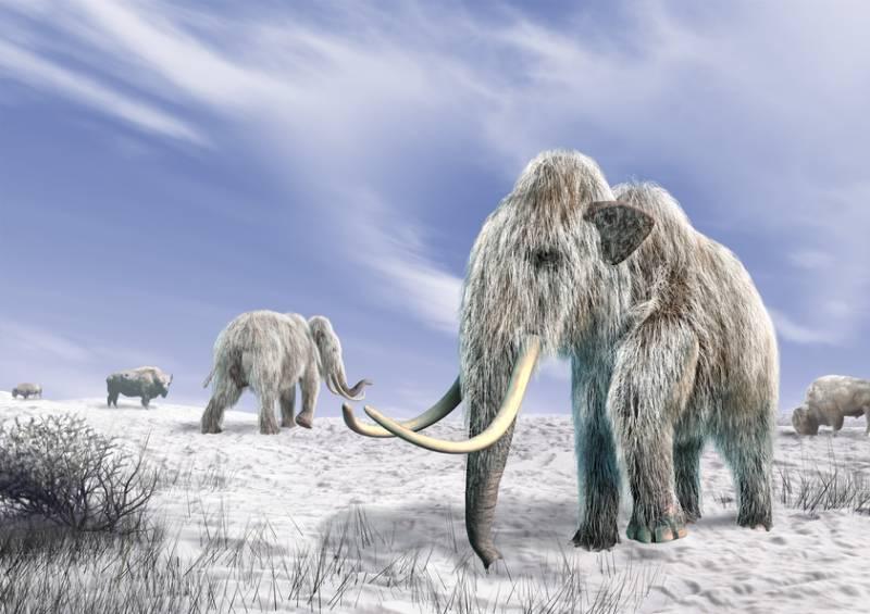 Загадки мамонтов - северных слонов Арктиды