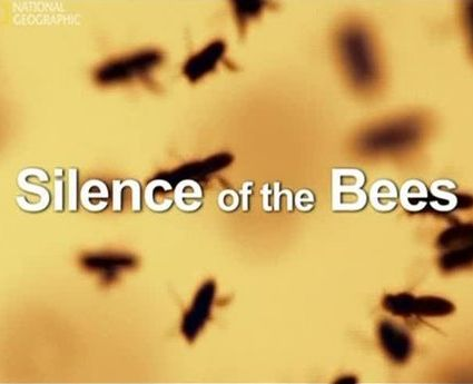 Молчание пчел : Silence of the Bees  (2007)