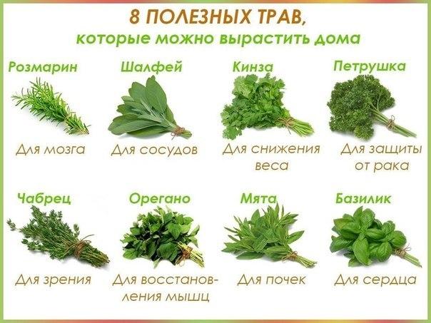 Вырастить растение домашних условиях